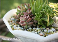 DIY succulent garden- great for any and every deck! Description from pinterest.com. I searched for this on bing.com/images