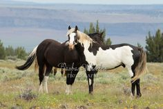 Such beautiful horses! All The Pretty Horses, Beautiful Horses, Animals Beautiful, Cute Animals, Horse Love, Horse Girl, Wilde Mustangs, Horse Couple, Horse Markings