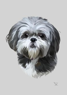 Perro Shih Tzu, Shih Tzu Puppy, Cute Dog Photos, Dog Pictures, Dog Paw Drawing, Havanese Dogs, Cute Cats And Dogs, Lhasa Apso, Dog Paintings