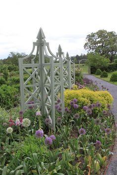 An allee of alliums in P. Allen Smith's garden. Via www.thegardenbuzz.com.