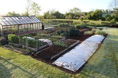 Latest tips for no dig, top quality vegetable growing with few weeds and healthy harvests, from using a compost mulch
