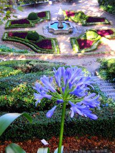 Flor Agapanto, Jardim do Palácio de Cristal, Porto - PT