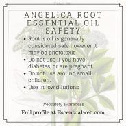 Learn more about angelica essential oil including safety tips. Essential Oil Safety, Are Essential Oils Safe, Homemade Products, Safety Tips, Book Of Shadows, Apothecary, Aromatherapy, Herbalism, Essentials