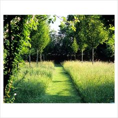 GAP Photos - Garden & Plant Picture Library - Path through meadow - GAP Photos - Specialising in horticultural photography
