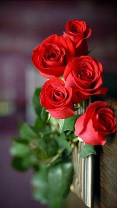31 ideas wallpaper floral vermelho for 2019 Beautiful Flowers Wallpapers, Beautiful Rose Flowers, Flowers For You, Romantic Roses, Flowers Nature, Amazing Flowers, Pretty Flowers, Red Flowers, Rose Images