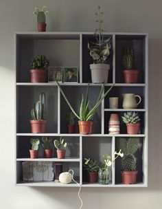 Cactus Shelves Home Decor that give the room some extra color and vibrancy. Have a look at our Cactus Home Decor ideas for more tips on how to incorporate cacti into your home. Cacti And Succulents, Potted Plants, Indoor Plants, Indoor Cactus, Indoor Garden, Home And Garden, Plants Are Friends, Plant Shelves, Small Shelves