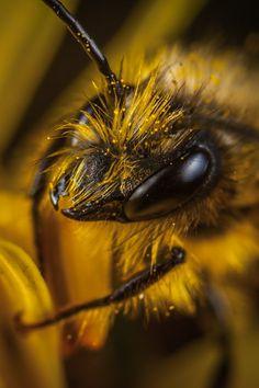 New free photo by Egor Kamelev. More work by Egor on Pexels at https://www.pexels.com/u/ekamelev/ #animal #bee #hairy