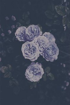 old english rose- beautiful! Roses potting area So Many Flowers All white: peonies. Bloom, Fotografia Grunge, Pale Tumblr, Grunge Tumblr, Pretty In Pink, Beautiful Flowers, Iron Fey, Grunge Photography, Flower Photography