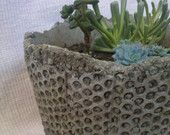 Items similar to Modern hypertufa cement planter pot w/ succulent plants, LOCAL BAY AREA only on Etsy