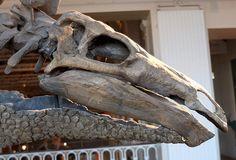 Stegosaurus, ...