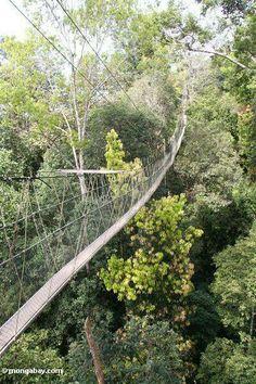 Kuala Tahan canopy walk