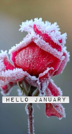 Hello January ❄️