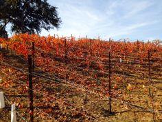Split Rock Vineyard
