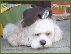 LINE 8 OF THE PUP SCOUT PLEDGE JOIN PUP SCOUTS TODAY AT http://www.pupscoutsusa.com/