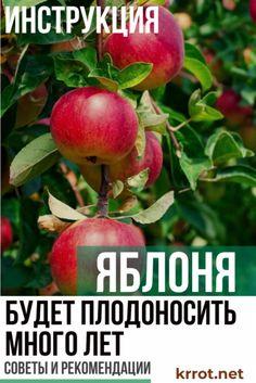 Walking Animation, Small Farm, Apple Tree, Lawn And Garden, Berries, Soda, Fruit, Vegetables, Gardening