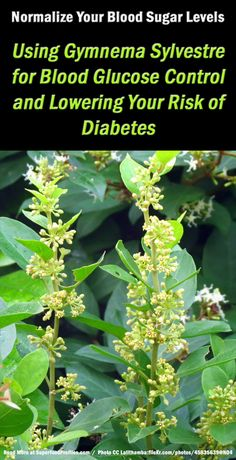 Gymnema Sylvestre for Diabetes and Blood Sugar Control ~ http://superfoodprofiles.com/gymnema-sylvestre-diabetes-blood-sugar-control