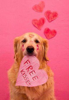 I want a free kiss from this lovely dooooog :-*