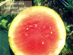 Always got to taste to test! Check this vibrant, juicy, organic watermelon.
