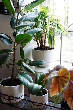 Kirppisrakkautta Flower Pots, Flowers, Plants, Flower Vases, Plant Pots, Plant, Planters, Royal Icing Flowers, Flower
