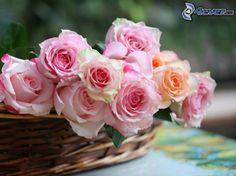 Pink Rose Garden Wallpaper roses wallpapers for desktop wallpaper | hd wallpapers | pinterest