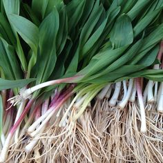 Daily dose of spring #ramps! Union Square Greenmarket in #Manhattan #farmersmarketnyc