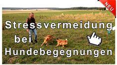 Hundebegegnungen mit und ohne Leine - Stressvermeidung bei Hundebegegnun...