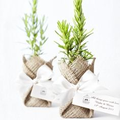 Bonbonniere ideas - could grow some herbs to put in these Plant Wedding Favors, Wedding Gifts, Our Wedding, Buffet Wedding, Wedding Ideas, Bomboniere Ideas, Woodland Party, Reception Decorations, Christening