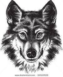 Bildresultat för wolf face from front drawing