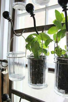 Indoor Herb Garden Ideas   Indoor herbs, Indoor gardening and ...