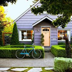 This front yard—once patchy grass and a parking strip—is now defined by bright boxwood, complementing the house's purple paint.   Photo: Thomas J. Story   thisoldhouse.com