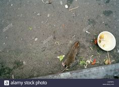 Image result for in the gutter