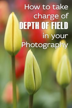 Understanding how to control depth of field in your photographs is one way to take creative control of your images.  http://annemckinnell.com/2012/09/17/how-to-take-charge-of-depth-of-field-in-your-photography/ #photography #phototip