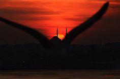 想像著在夕陽時分跟著伊斯坦布爾的海鳥飛越過一座座雄偉的清真寺與細數不盡的美景。 ©Reci Musab