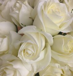 """Rose, white...innocence or """"I am worthy of you."""""""