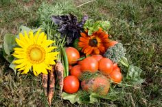 Soulful Prairies' Grow and Share Gardens project in Woodstock is open to the general public. soulfulprairies.com