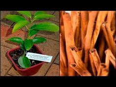 AFTER SEEING THIS, you will never buy Cinnamon again; If I had known before - YouTube
