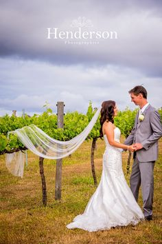 Bride and Groom in vineyard holding hands viel over the vines. https://www.facebook.com/HendersonPhotographics