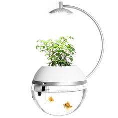 citiesocial – 香草與魚Herb & Fish