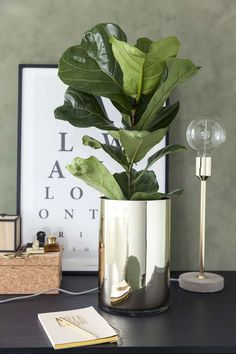 Modern Interior Decorating with Care Free Houseplants, Cheap Green Ideas House Plants Decor, Plant Decor, Chartreuse Decor, Natural Landscaping, Growing Plants Indoors, Cafe House, White Planters, Green Home Decor, Rock Decor