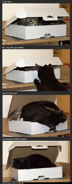 kitties and their boxes :D
