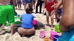 Officials say a dolphin washed ashore on Kure Beach after being injured during a possible shark attack. (Source: Audrey Schneider)