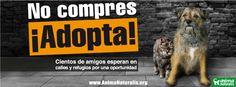 Cientos de amigos esperan en calles y refugios por una oportunidad    www.AnimaNaturalis.org