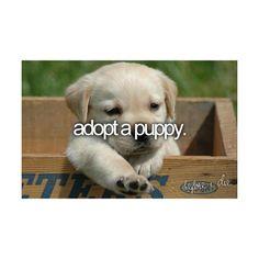 , Don't Adopt A Labrador Retriever. Here Are 10 Reasons Why , Don't Adopt A Labrador Retriever. Here Are 10 Reasons Why. Labrador Bebe, Labrador Puppies, Rottweiler Puppies, Corgi Puppies, Black Labrador, Cute Puppies, Cute Dogs, Dogs And Puppies, Doggies