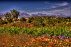 Namaqualand in Namibia and South Africa is the region that in spring changes into something surreal, when thousands of flowers start to bloom. Champs, African Tree, African Flowers, Socotra, Flora, Bali Resort, Borobudur, Out Of Africa, Machu Picchu