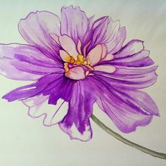 Water color of purple peony