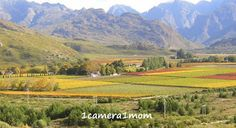 1camera1mom: Hex River Valley, South Africa - 3 more photographs of beautiful vineyards and mountains in the Hex River Valley. http://1camera1mom.blogspot.com/2012/08/hex-river-valley-south-africa-2.html#