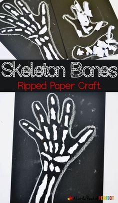 Skeleton Bones Rippe
