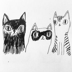 Cats of Istanbul Emmi Jormalainen https://instagram.com/emmijormalainen/