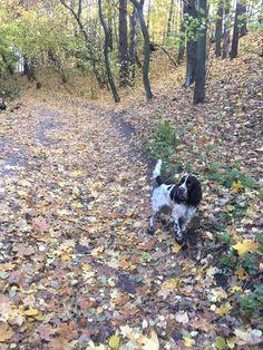 Nature, bushcraft, doggo, companion