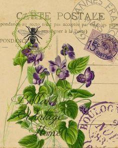 Botanical Violet Carte Postale Print